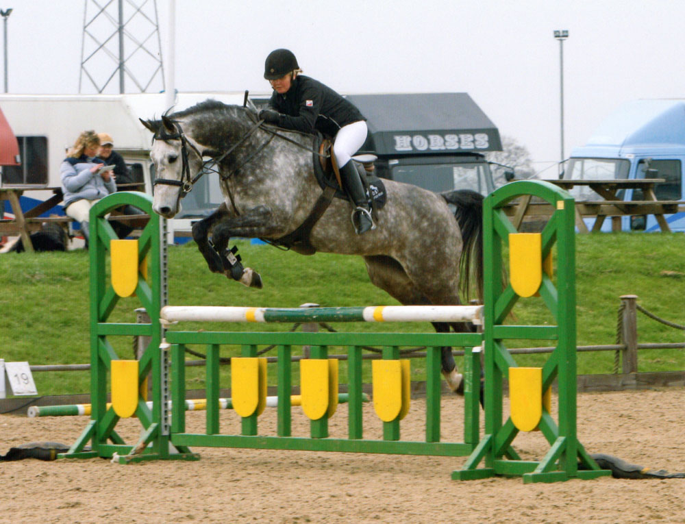 Danish Warmblood Horses For Sale